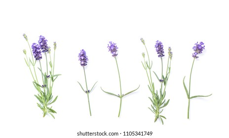 Lavender flowers isolated on white background. Floral banner flat lay