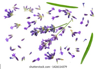 lavender flowers isolated on white background. top view