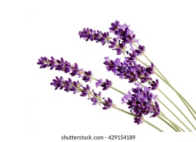 Lavender flowers  isolated on a white background.   Aromatic herbs.