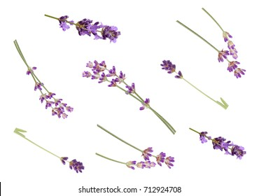 Lavender flowers isolated on white background, top view. Trendy flay lay composition, tender romantic style,