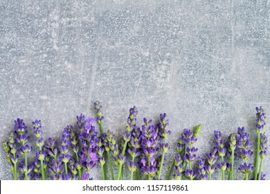Lavender flowers on gray background. Copy space, top view. Summe