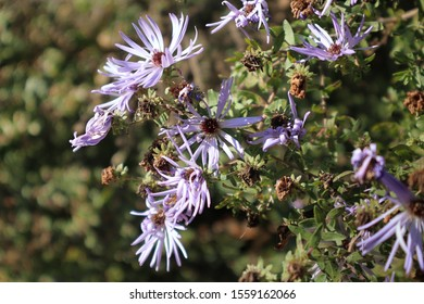 Lavender Flowers on a Sunny Day