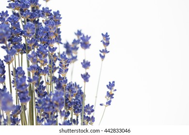 lavender flowers on the white background.