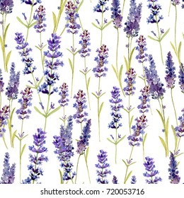 Lavender flowers on a white background. Seamless background.