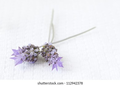 Lavender flowers over white towel background