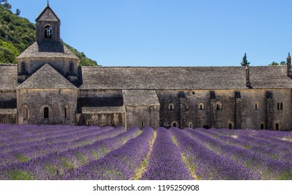 Lavender of France and Abbey
