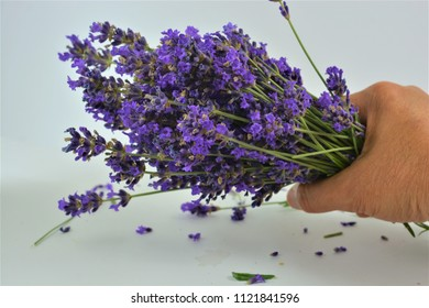 Lavender in a hand