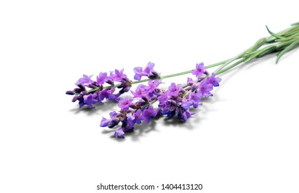 Lavender herb flowers on white background
