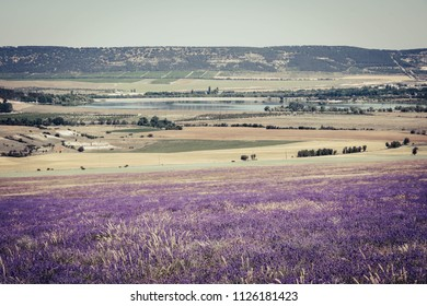 Lavender make Colors