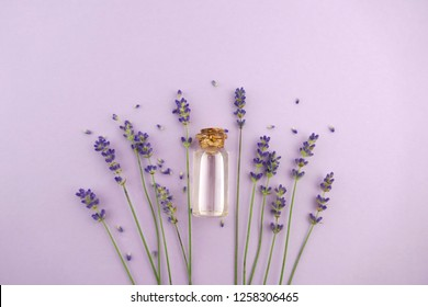 Lavender oil and lavender flowers with seeds on a light pastel lilac background.Pure Essential Organic Lavender Oil