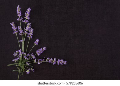 Lavender on black background top view with copyspace. Culinary aromatic herbs.
