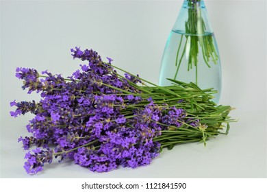 Lavender on a white background