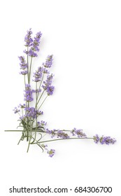 Lavender on white background top view with copy space. Aromatic lavender herbs from above.