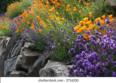 lavender and poppy flowers