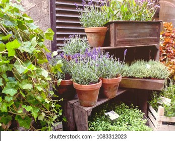 lavender in pots and other plants in boxes, a small shop on the narrow streets of the ancient city