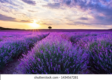 Lavender purple field with beautiful sunset and lines