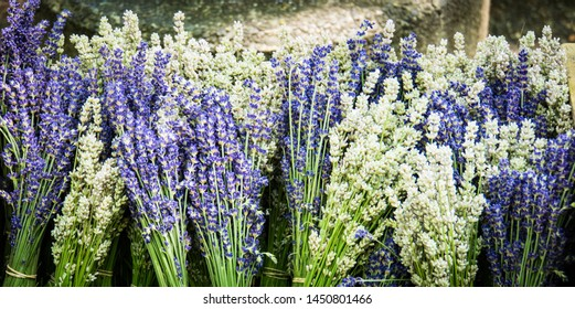 lavender, purple,white, flower, floral, aroma, scent, bunch, bouquet, for sale, market, herb, fragrant, perfume, oil,