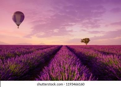 Lavender rows lines with lonely tree and hot air balloon at sunset iconic Provence fields landscape
