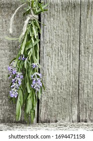 Lavender tuft hanging under the roof and drying on the background of old textured wooden wall, closeup, copy space, agriculture and aroma herbs concept, vertical