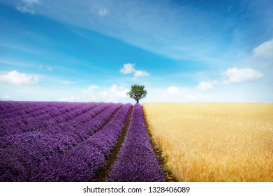 Lavender and wheat field with tree