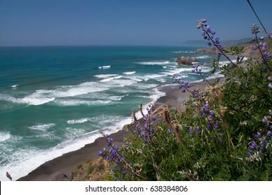 Lavender wildflowers blooming on rugged West Coast beach