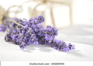 lavender,lilac lavender