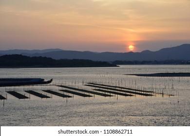 laver culture net and evening sun