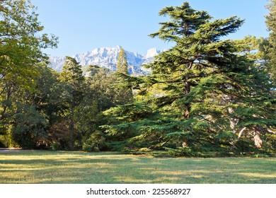 lawn in Alupka (Vorontsov) park in autumn day, Crimea