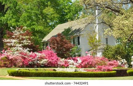 Lawn with Azalea bushes on Azalea Trails in Tyler, Texas