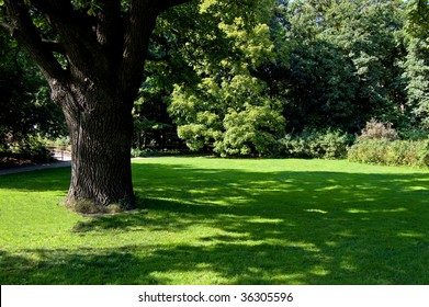 Lawn in a botanical garden in Moscow with an old tree