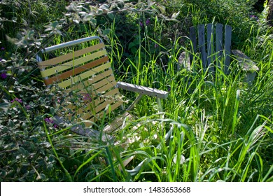 Lawn chair and adirondack chair in garden obscured by overgrown grass and shrubs, in Victoria, British Columbia