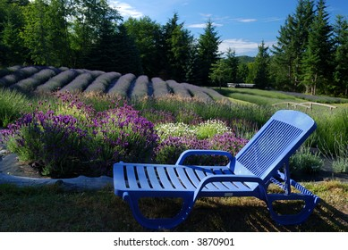 lawn chair and lavender field