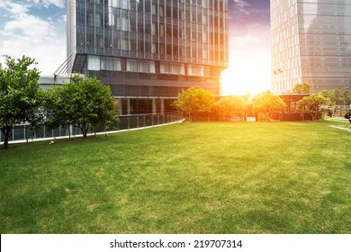 The lawn in the city of shanghai