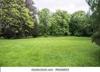 lawn in forest