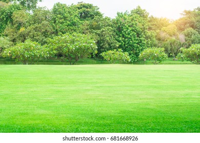 Lawn, garden and trees