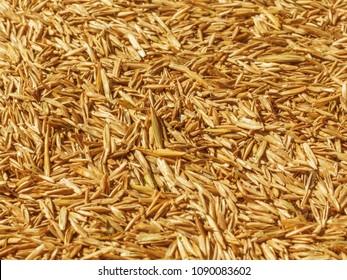 Lawn grass seeds. Texture. Background