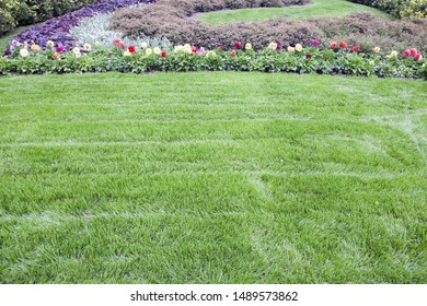 Lawn green grass neatly trimmed