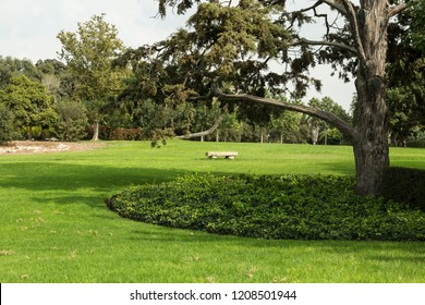 Lawn with green grass and trees