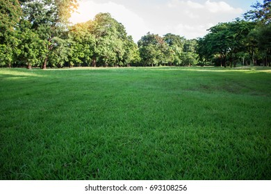 Lawn and green trees in the garden.