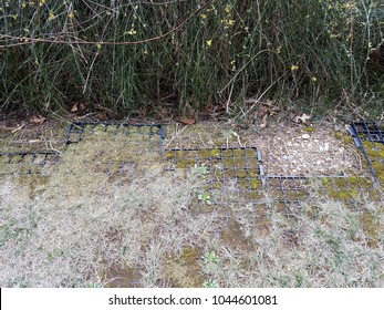 lawn or ground with exposed black plastic grid for erosion control