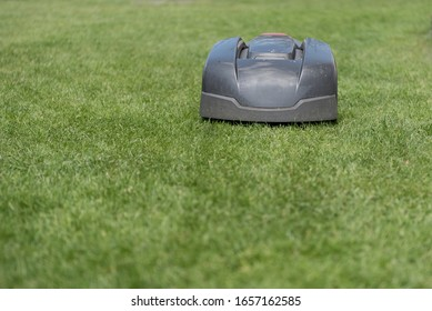 Lawn mower cuts green grass. Work alone in the garden.