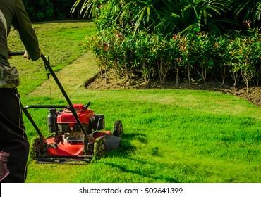 Lawn mower cutting green grass in backyard,Garden service,grass cutter cutting green lawns.Gardener mowing with lawnmower
