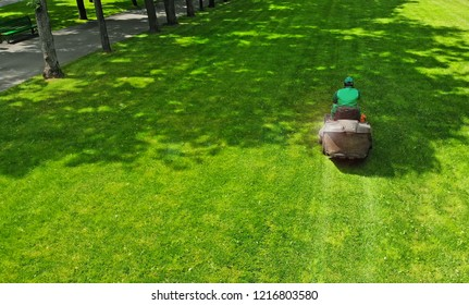 Lawn mower. Gardener cuts grass in a park lawn with a grass cutter.