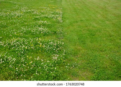 lawn in one half uncut with clover and in the other half regularly mown to a low stalk height. the contrast of these maintenance is seen in one photo