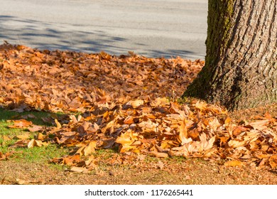 Lawn in a park covered by yellow leaves with tree trunk on side