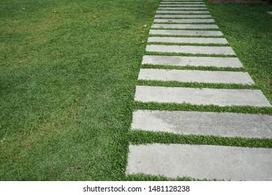 Lawn path In the garden
