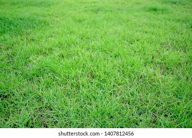 Lawn, playground with family Warm and beloved, beautiful green grass, clean