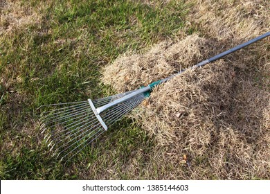 Lawn rake at a dethatched lawn grass heap in the spring garden