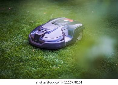lawn robot at work in my garden