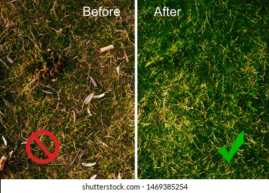 Lawn with seed shuck and cigarette butts matching before and after cleaning with ban symbol. Image with text and divided by white vertical line. Concept of combating environmental problems pollution.